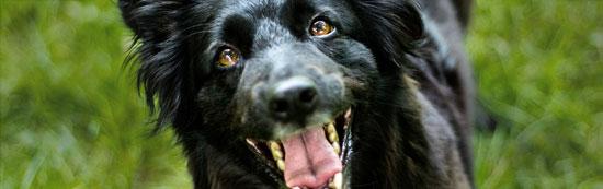 letsel na hondenbeet